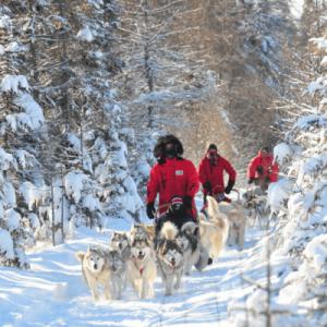 Expédition traîneau à chiens Québec