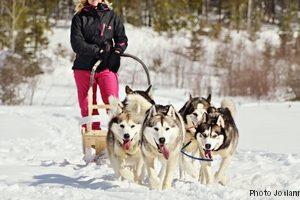 Traineau chiens 02 Saguenay