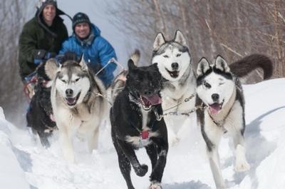 Traîneau à chiens Montréal Val des lacs