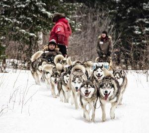 Traîneau à chiens Québec